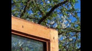 Божьи коровки на даче(На даче в домике за зиму развелось много божьих коровок. Они не могли вырваться на свободу. Ползали по окну,..., 2016-04-18T22:37:32.000Z)