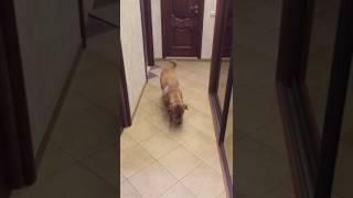Последствия грозы.  Собака сгрызла дверь 29 мая 2017 Шарпей. Кто сгрыз?
