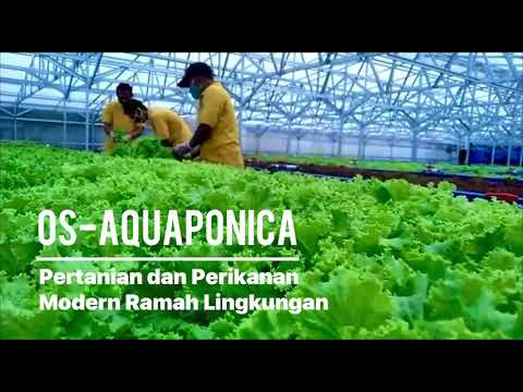 OS-Aquaponica: Combining Aquaculture (Fish N Shrimp) And Vegetables In Re-Circulation Water System