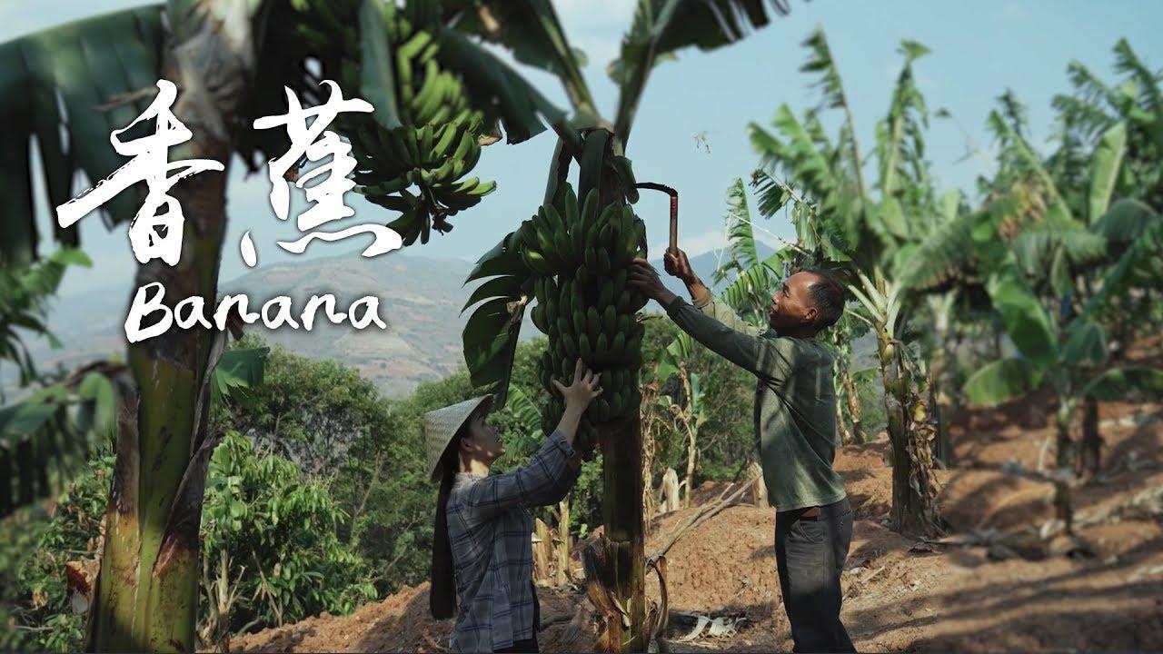 「一席一果」——怒江边上的香蕉【滇西小哥】