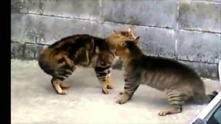 Мартовские коты. Влюбленные коты.