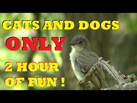 CAT SITTER VIDEO : 2 Hours 100's of Birds Beautiful HD Quality For Your Cat to watch