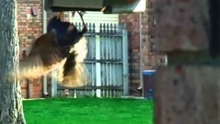 """""""woodpecker"""" Feeder(starlings Cannot Hang Upside Down Oops)"""