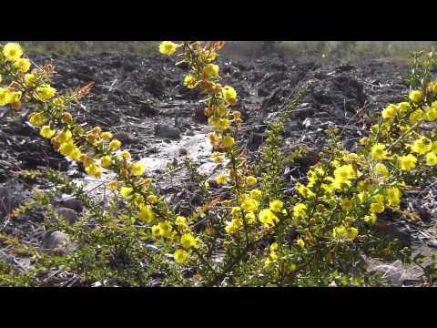 Mt Owen Mine Rehab