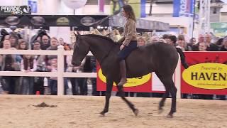 Kenzie Dysli reitet die Doma Vaquera ohne Sattel und Zaumzeug (www-pferde-magazin.info)