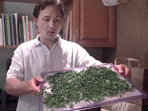 How to Dry Moringa and Make Green Powder - A New Raw Super Food