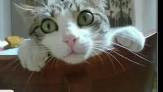 Википедия кошек