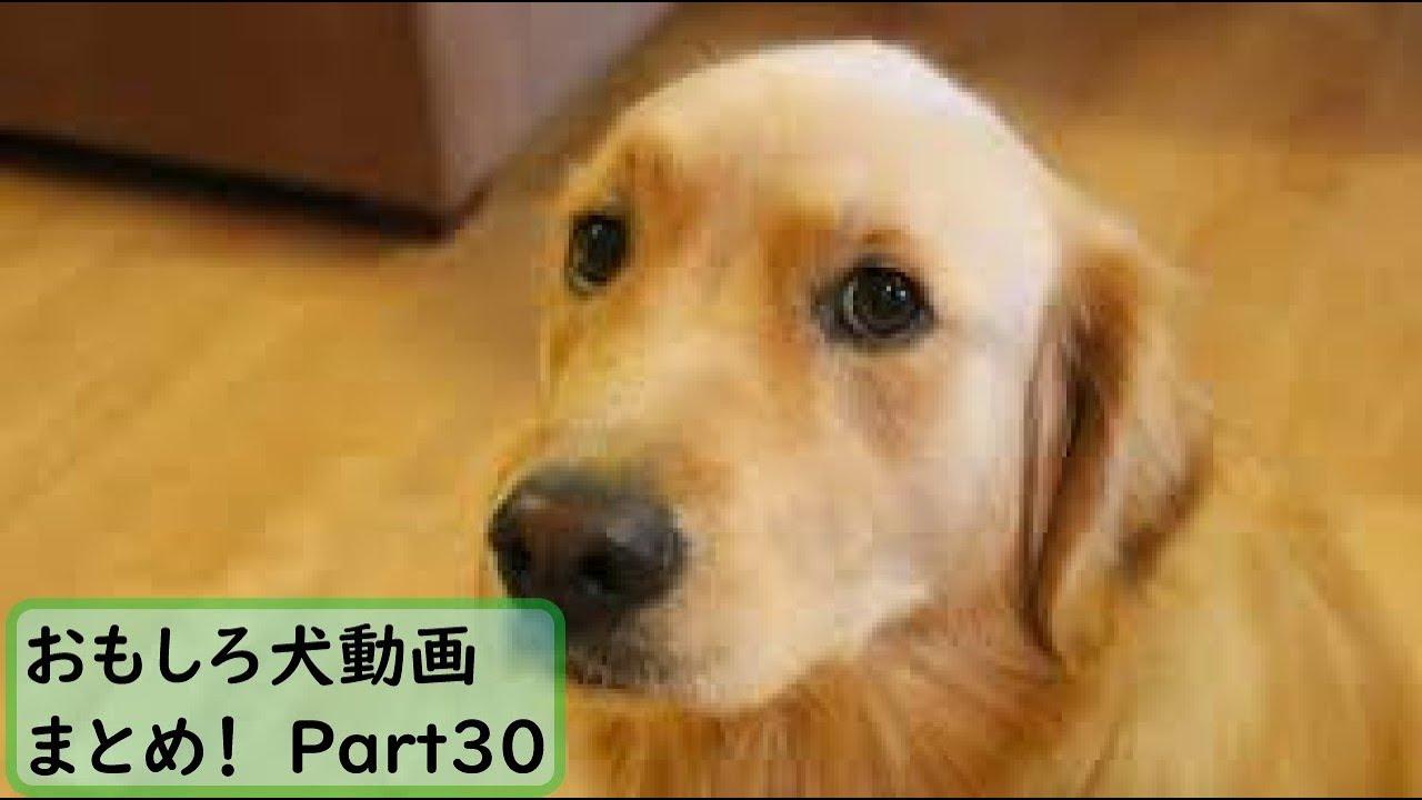 動画 犬 おもしろ YouTube上で人気の「犬動画」「猫動画」のランキングが発表!