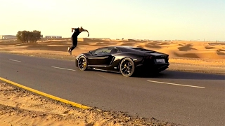 Угнали Lamborghini. Alexander Tikhomirov in Dubai #4