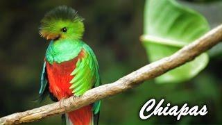Chiapas: historia, cultura y atractivos naturales
