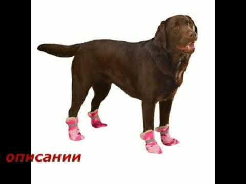 Купить костюм для собаки. - YouTube
