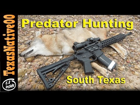 Coyote Hunting In South Texas With The 3-Gun Competition AR15