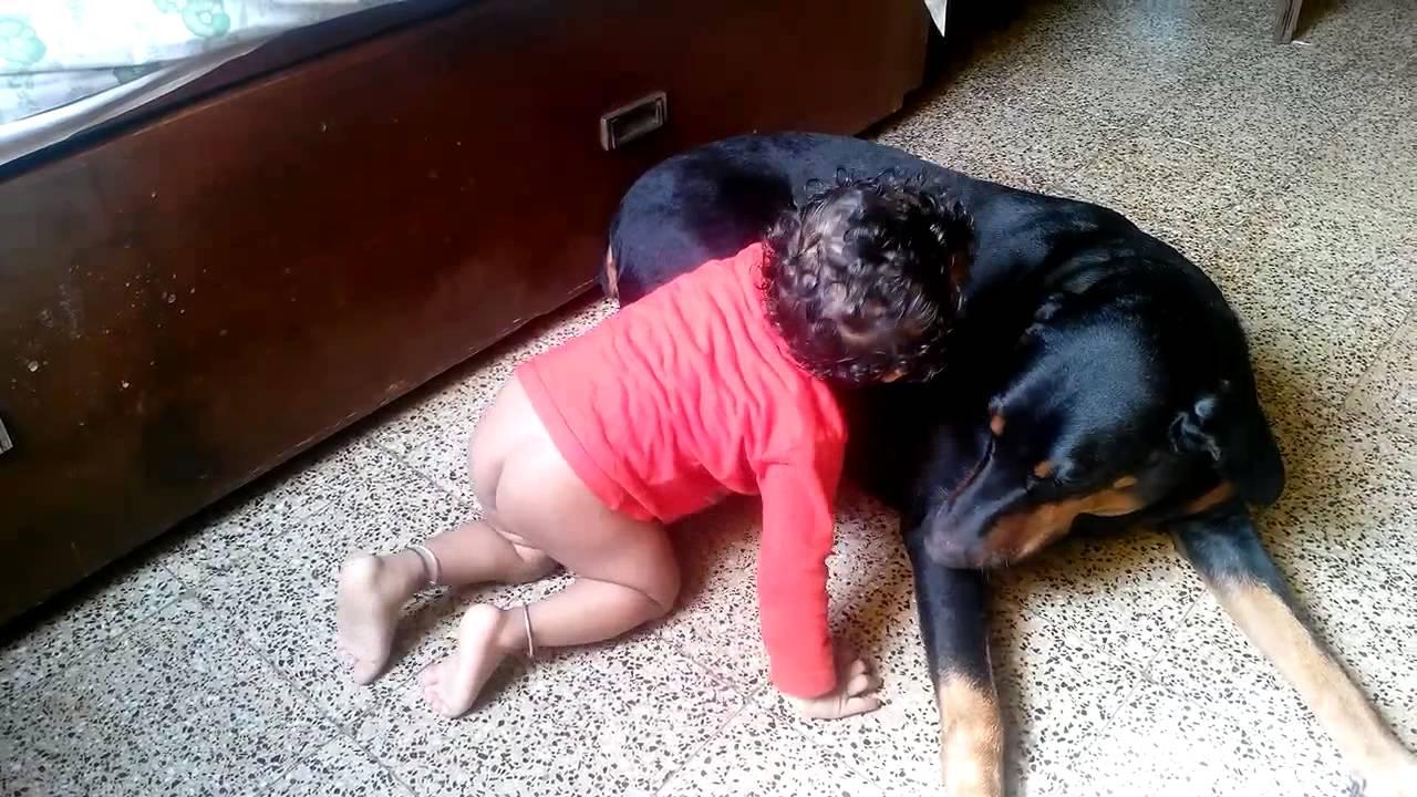 Dog Taking Care Of Baby Youtube