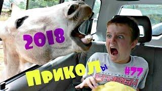 ЛУЧШИЕ ПРИКОЛЫ 2018 | БОЛЬ и РЖАЧ |  Funny 2018  #77