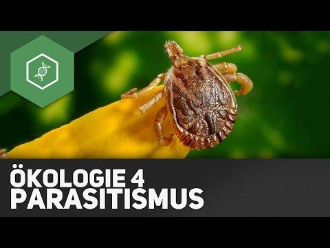 Parasitismus – Ökologie 4