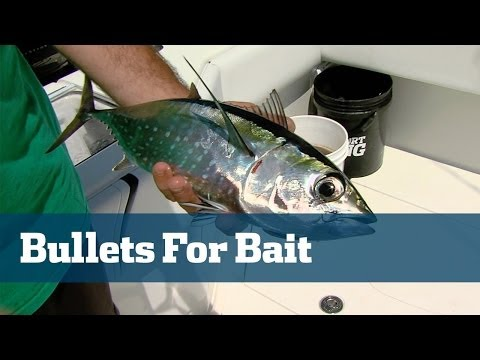 Blackfin Tuna & Bonito; How To Fish Planers - Florida Sport Fishing TV