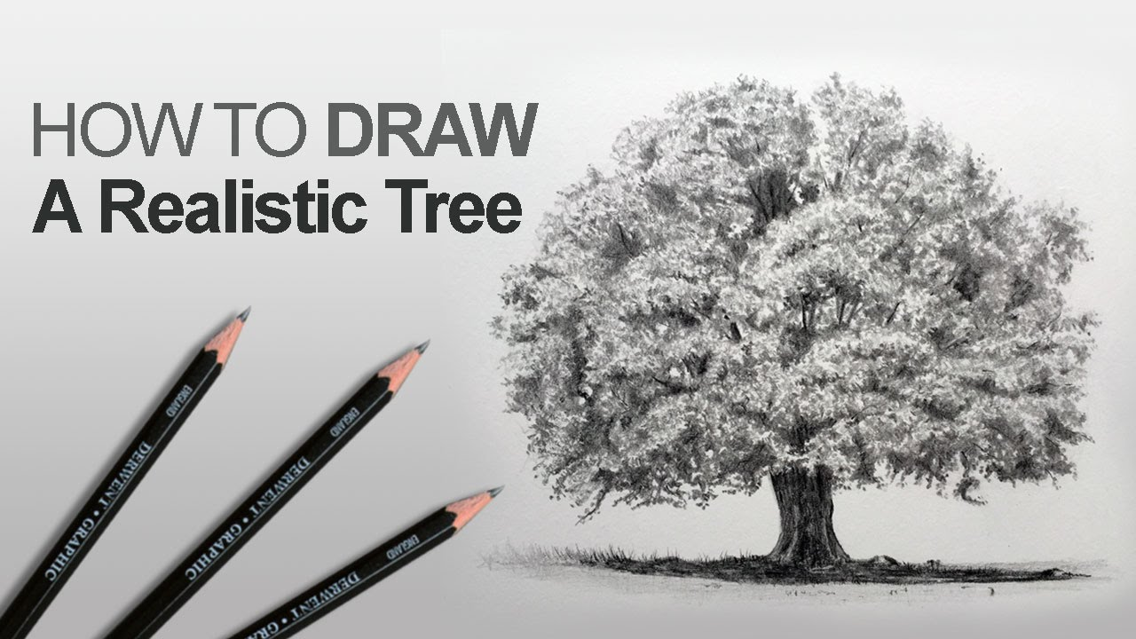 How To Draw A Tree Realistic Youtube