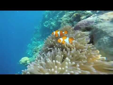 Uepi Island Resort - Solomon Islands (1080p)