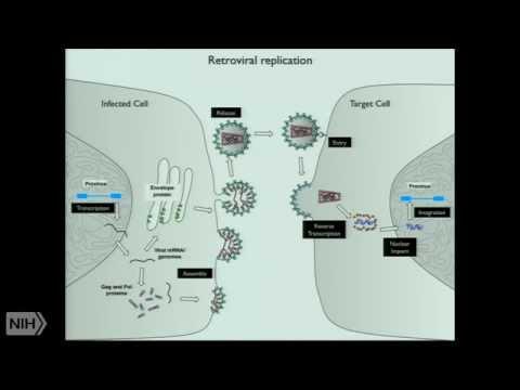Intrinsic host defenses against HIV-1