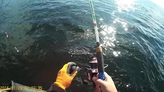 Ми весь день гамселили палтуса. Рибалка. Охотське море.Магадан.П-ів Коні.