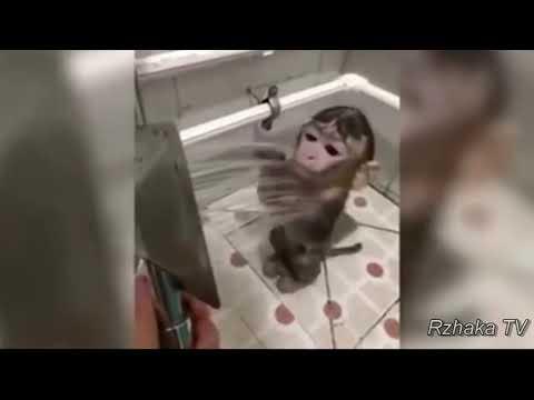 Топ Подборка СМЕШНЫЕ ОБЕЗЬЯНЫ, смешное видео про обезьян, Funny Monkey Videos