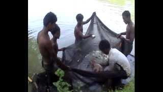 ARIF FISH FARM 2013