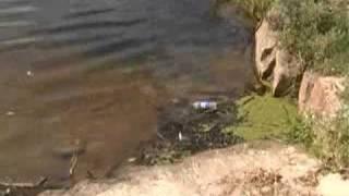 Экосистема малых рек в Украине
