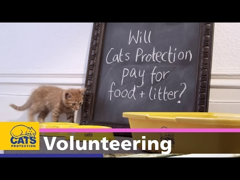 Being A Cats Protection Fosterer