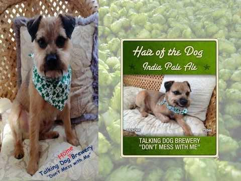Introducing Talking Dog's Hair of the Dog IPA