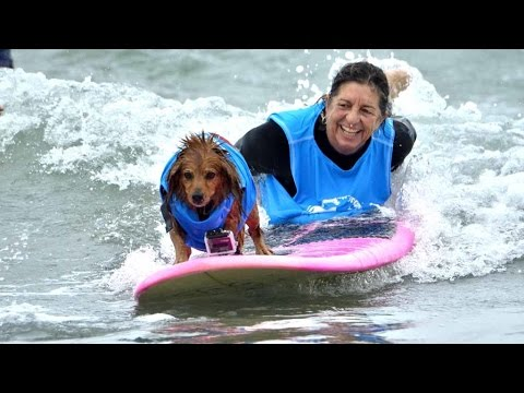 Surf Dog Surf-a-thon 2016 at Del Mar Dog Beach