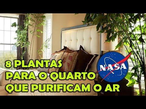 NASA INDICA 8 PLANTAS QUE PURIFICAM O AR DO SEU QUARTO