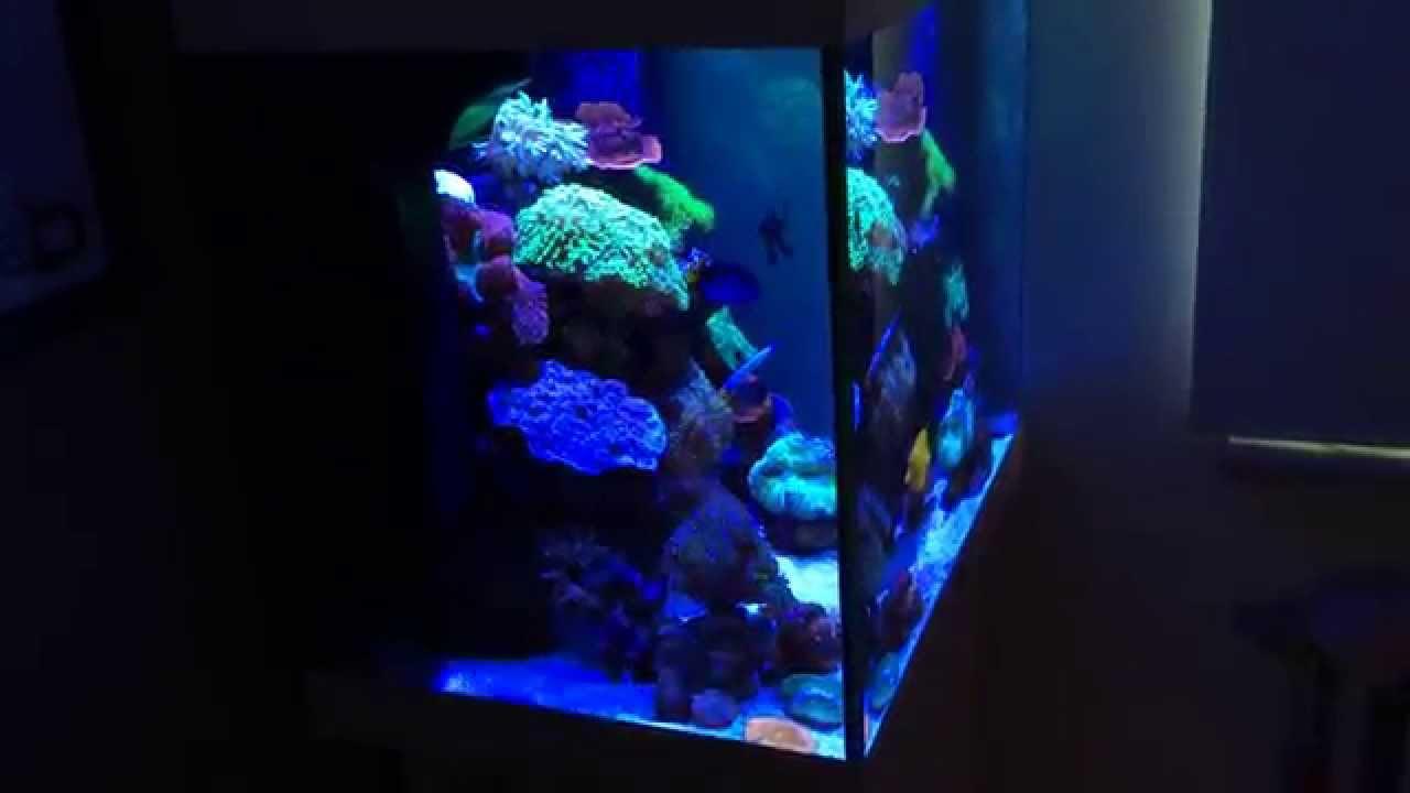 Juwel Lido 200 Saltwater Reef Setup Update 2 Hd Youtube