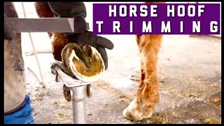 Horse Hoof Trimming. Basic Hoof Care. How To Trim A Horse. When To Pull Shoe. Shod vs Barefoot Horse