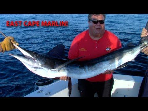 533 East Cape, Marlin Fishing | SPORT FISHING