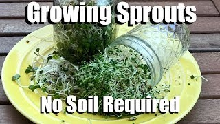 How to Easily Grow Sprouts In a Jar Indoors, No Soil Required