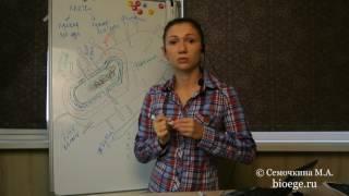 Коротко о клетках: Прокариотические клетки (Эпизод 5)
