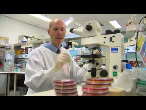 Day in the Life - Microbiology / Virology - Prof  Bill Rawlinson