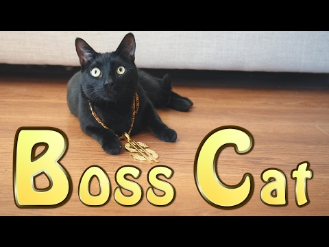 Boss Cat (Official Music Video)