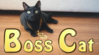 Boss Cat (Official Music Video)