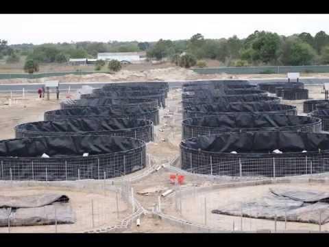 Florida 2013 faife farm intensive tilapia youtube for Fish farms in florida