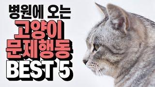집사를 애태우는 고양이의 문제행동 베스트 뽜이브!!!