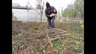 Укрытие инжира на зиму(Укрытие на зиму инжира растущего в саду., 2014-10-25T14:36:44.000Z)