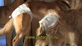 Памперсы (подгузники) для собак и кошек в Интернет-зоомагазине ПетСовет http://www.petsovet.ru/