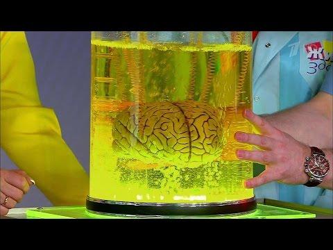 Вопрос: Как действовать при сотрясении мозга?