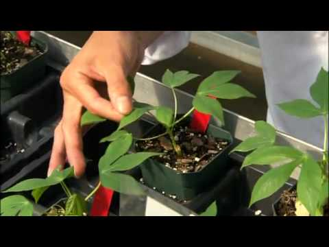 United States - Tour of Danforth Plant Science Center