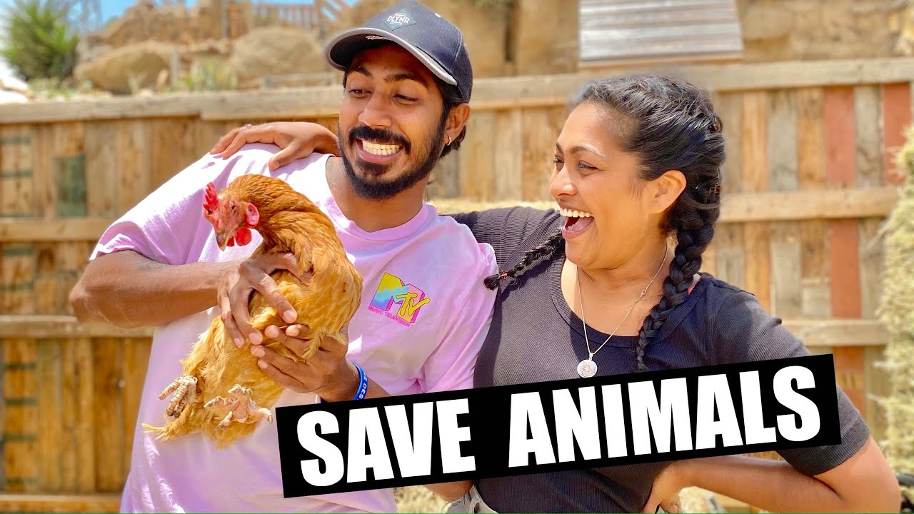 මරනෙන් බේර ගත්ත අහිංසක සත්තු | SAVE ANIMALS | Episode 11 | Tenerife Horse Rescue | BINARIO12