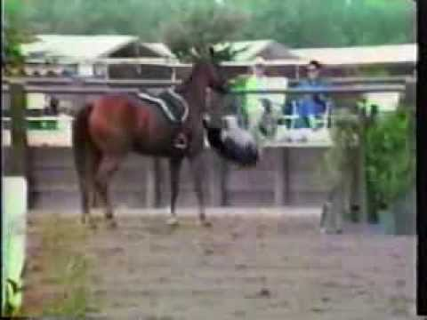 Harness Horse Racing Accidents, Crashes, Bloopers & Horse ...