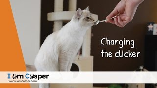 Charging the clicker with Casper  Clicker training for Cats