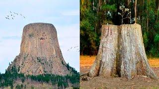 el enigma de los árboles gigantes en el pasado
