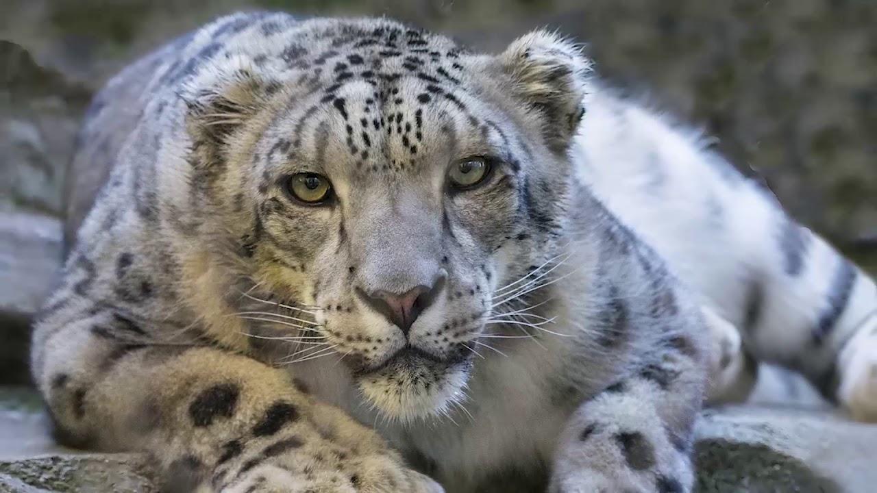 Rarest animal